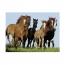 Пазл Табун лошадей, 500 деталей