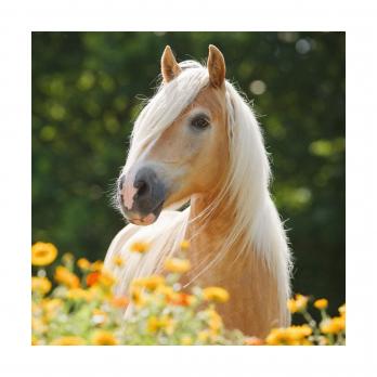 Пазл Красивые лошади, 4 в 1